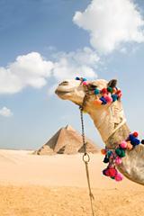 Египетская лотерея: путешествовать по Синаю становится опасно для жизни