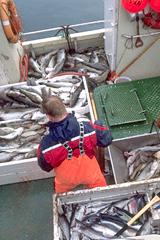 Россия и Норвегия никак не могут поделить рыбу. В Баренцевом море задержан очередной российский траулер.
